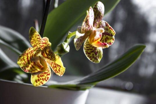 Orchideen giftig?