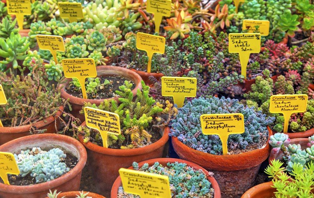Botansiche Pflanzennamen