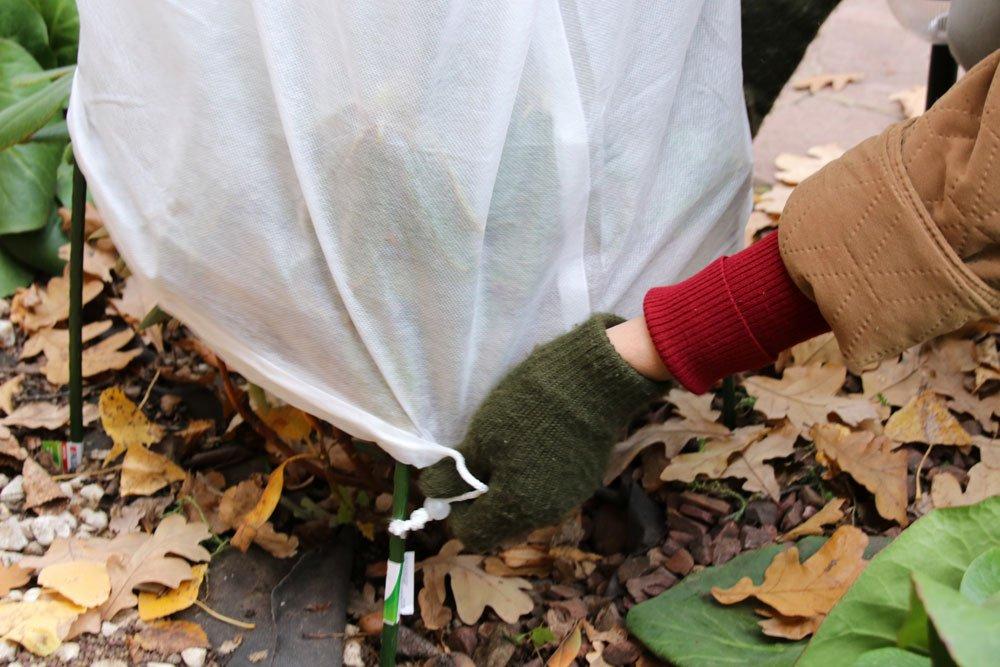 Frostschutz für empfindliche Pflanzen