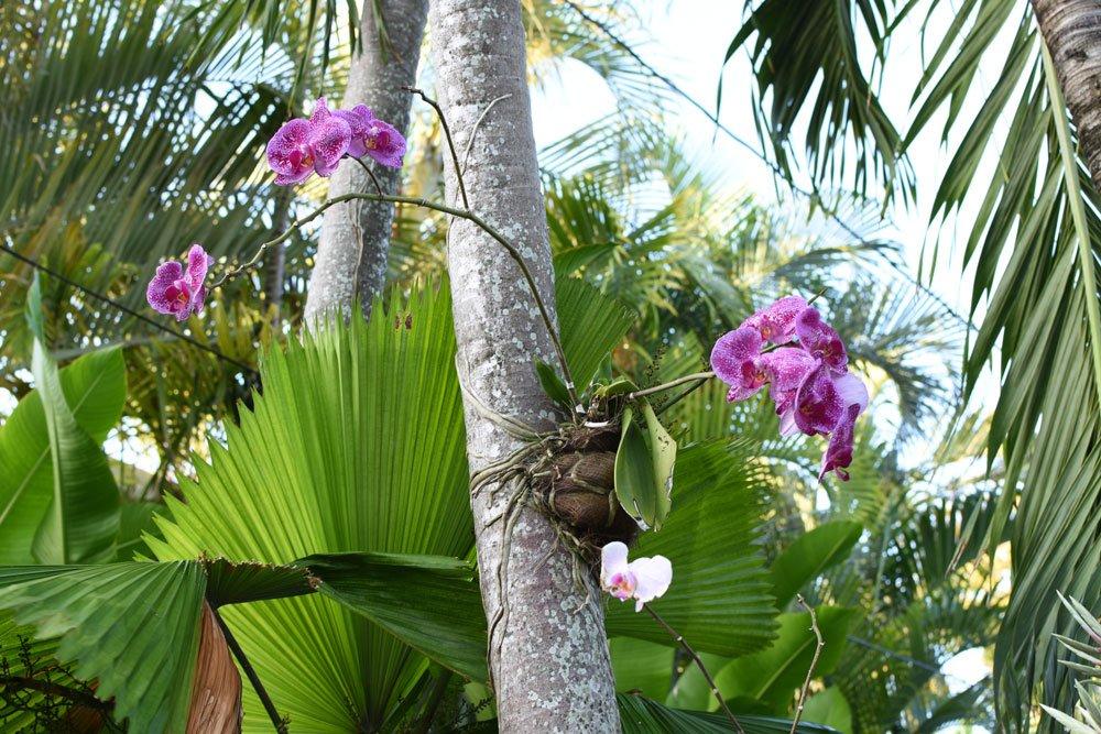 Orchidee Baum