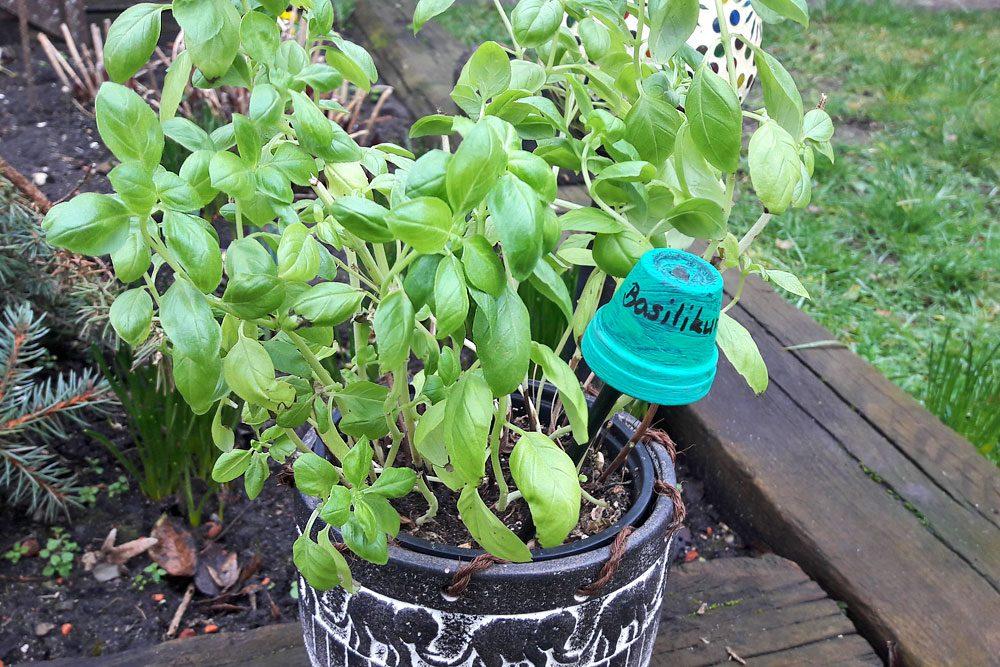 Tontöpfchen-Pflanzenstecker