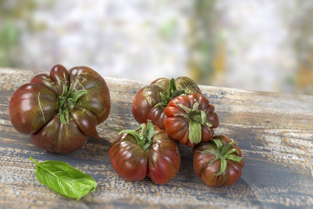 Schwarze Krim Tomate