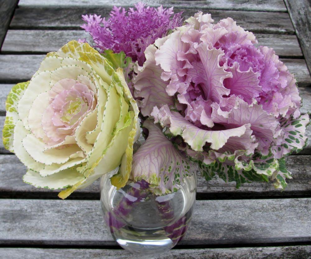 Zierkohl in der Vase