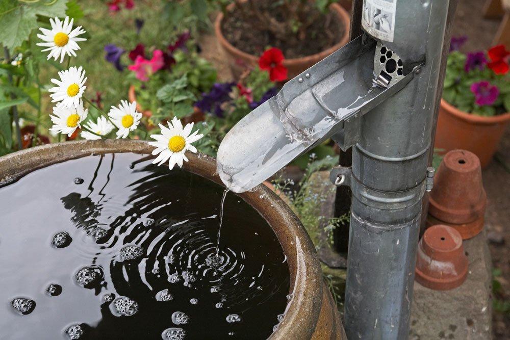 Gießwasser für Tomaten