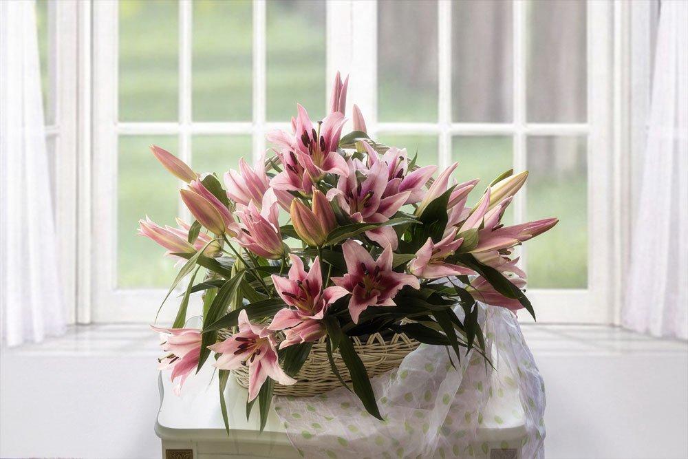 Lilien im Topf Pflege