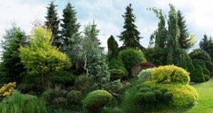 Immergrüne Pflanzen im Garten