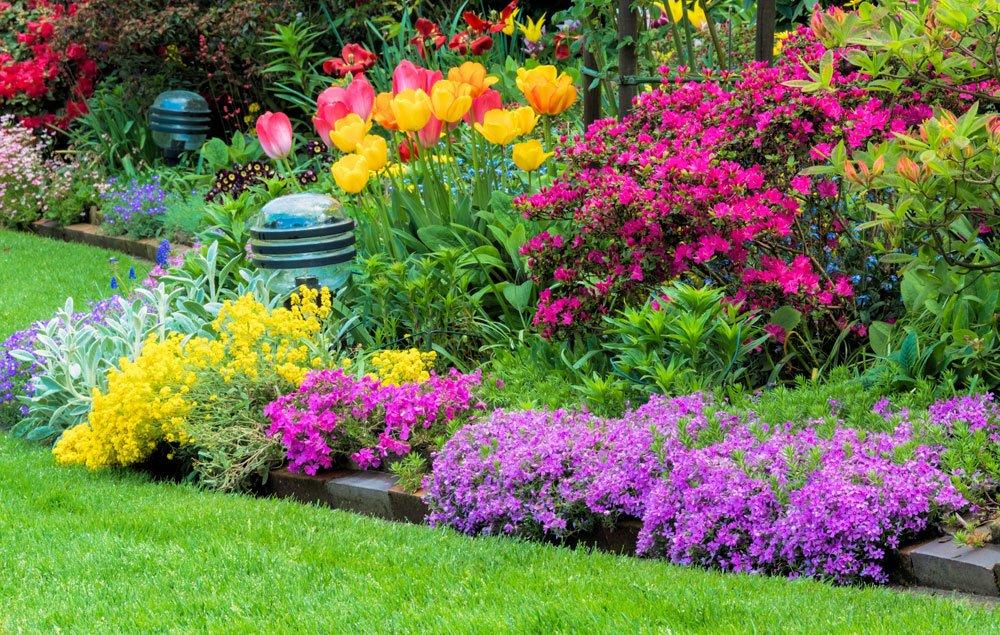 Steinkraut Garten