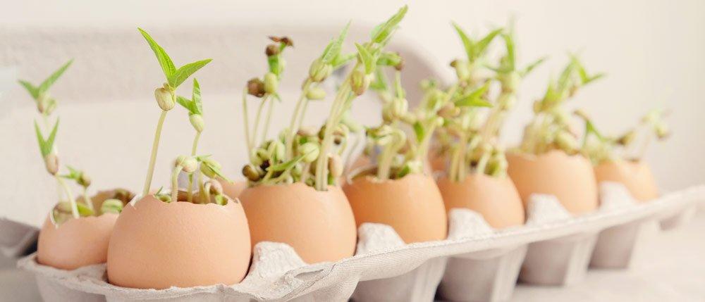 Eierschalen al Anzuchttöpfe