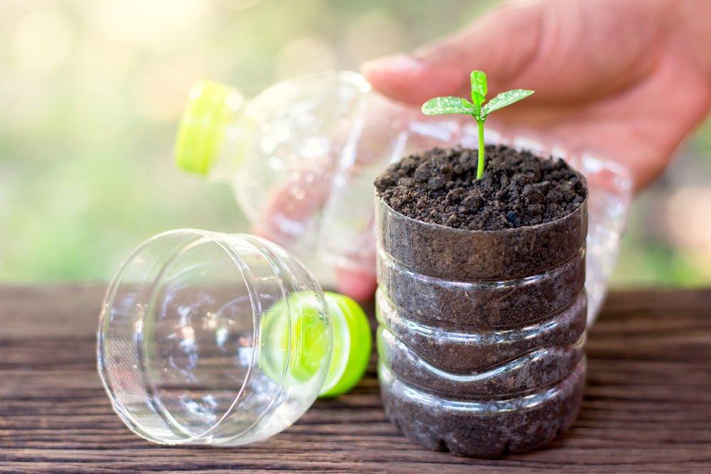 Kunststoffflaschen als Zimmergewächshaus