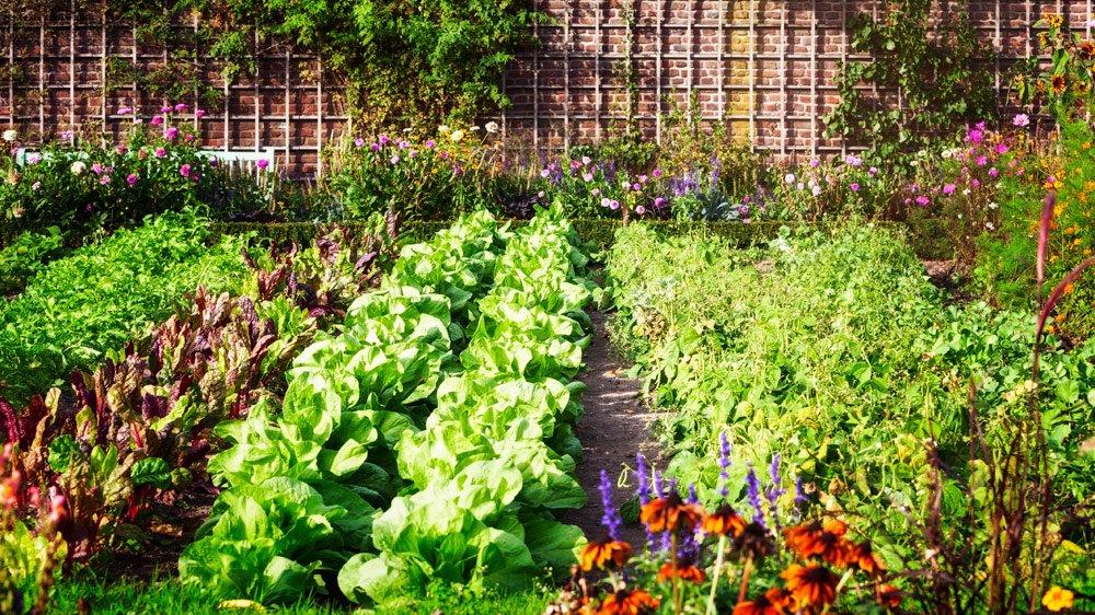 eigenes Gemüse anbauen