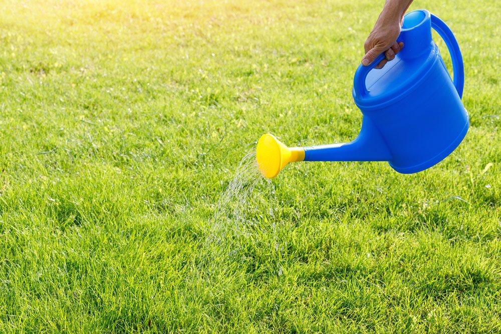 Gartenlaubkäfer bekämpfen