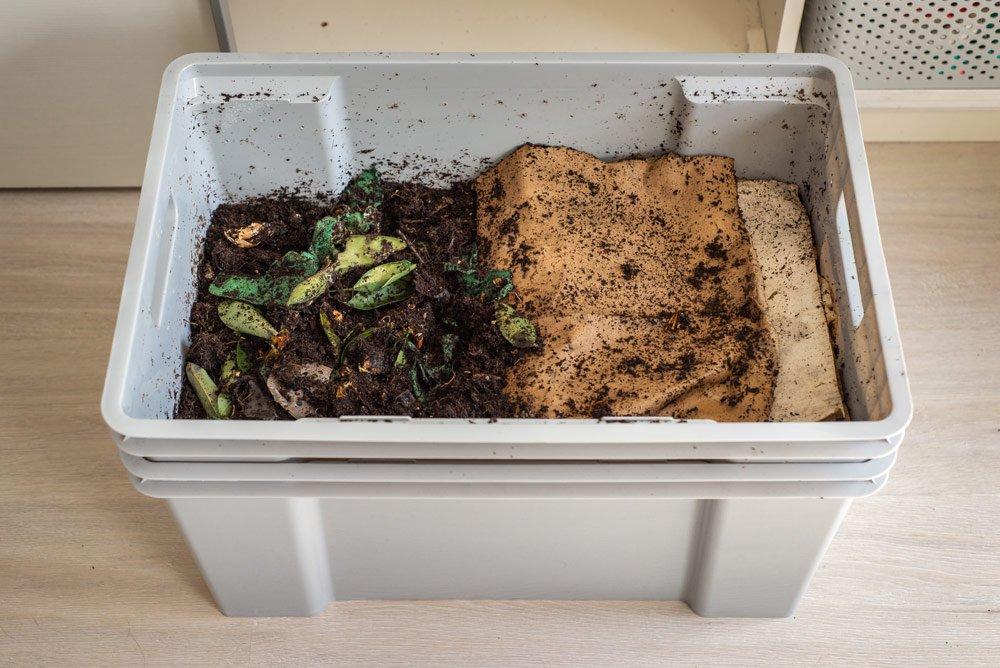 Kompostwürmer züchten