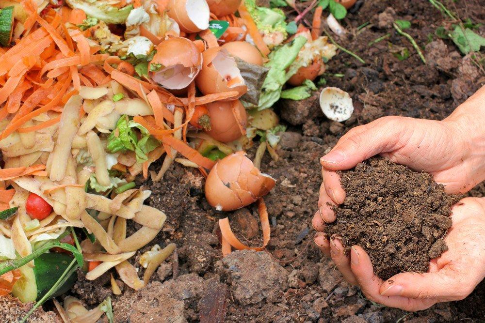 Walnussschalen verwerten: Kompost
