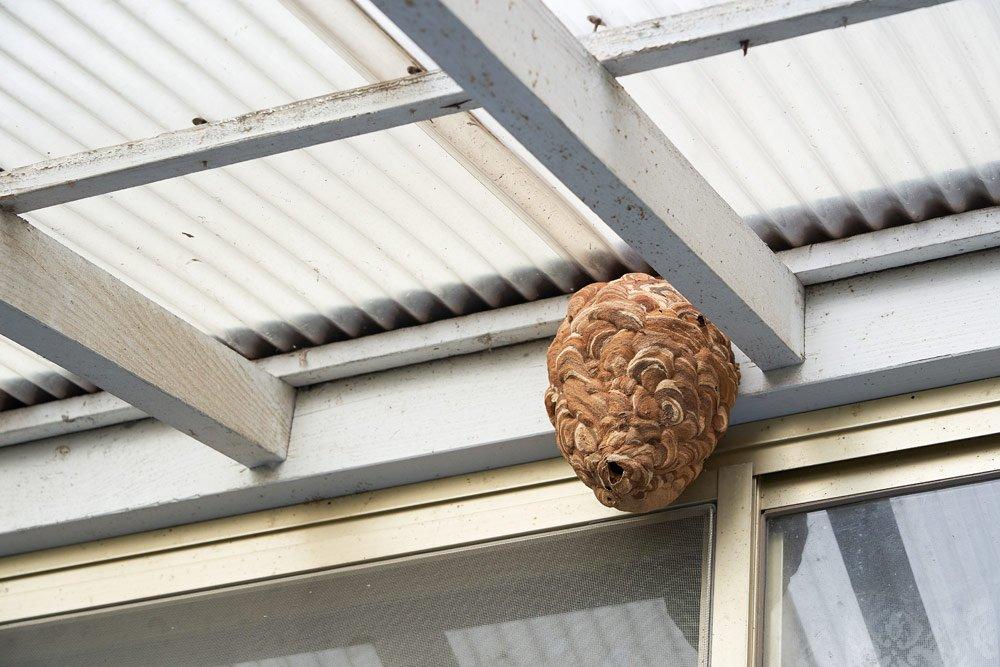 Wespen: Nestbau verhindern