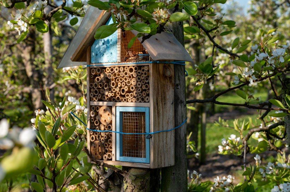 Insektenhotel aufstellen
