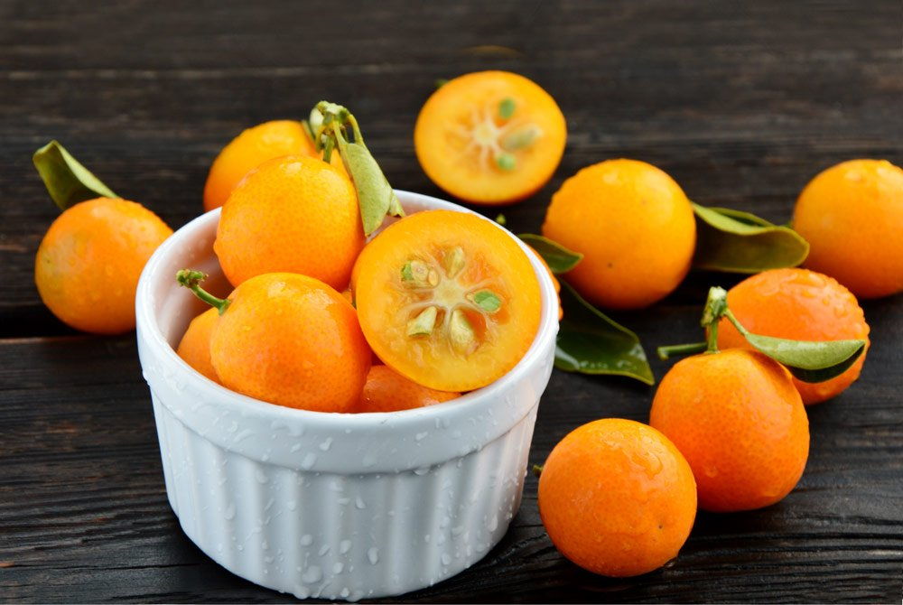 Kumquat vermehren