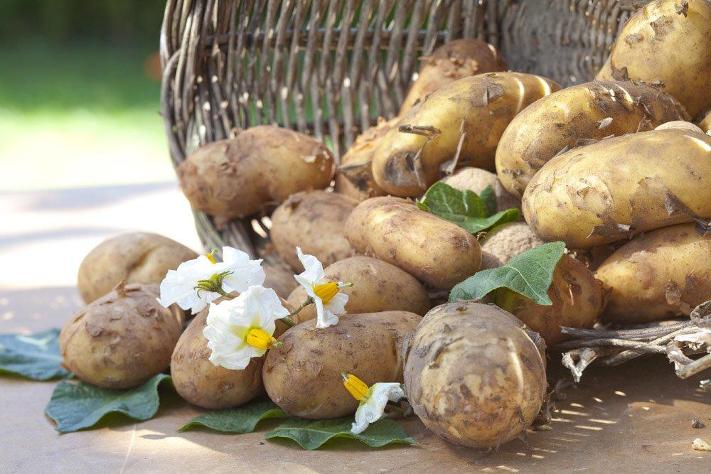 Kartoffel vorbereiten