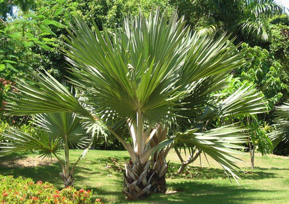 Luxus Garten Pflanzen