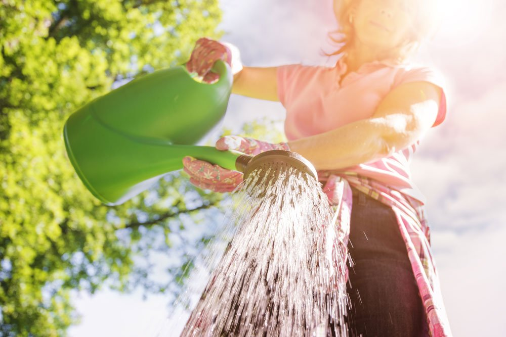 Frau gießt Erdbeerspinat