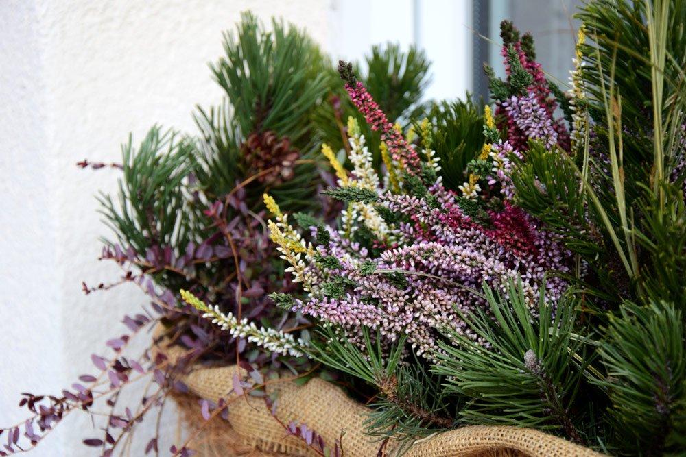 Balkonpflanzen winterhart: 13 Pflanzen für einen Farbtupfer auf dem winterlichen Balkon