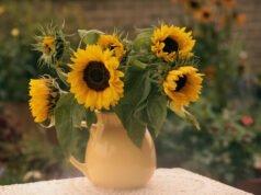 Sonnenblumen in der Vase: Haltbarkeit