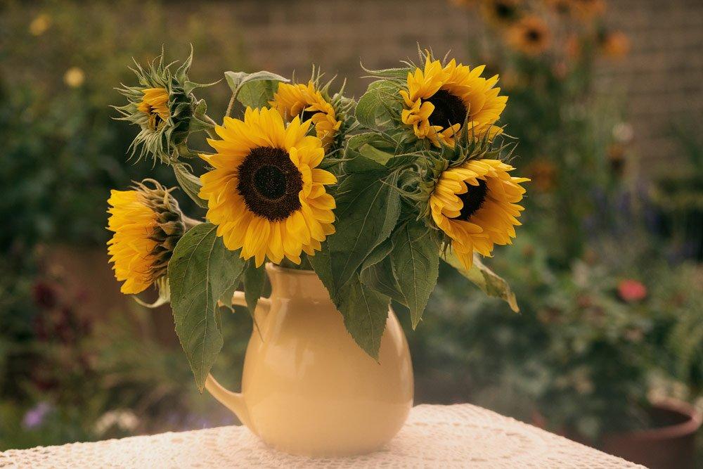 Sonnenblumen in der Vase haltbar machen