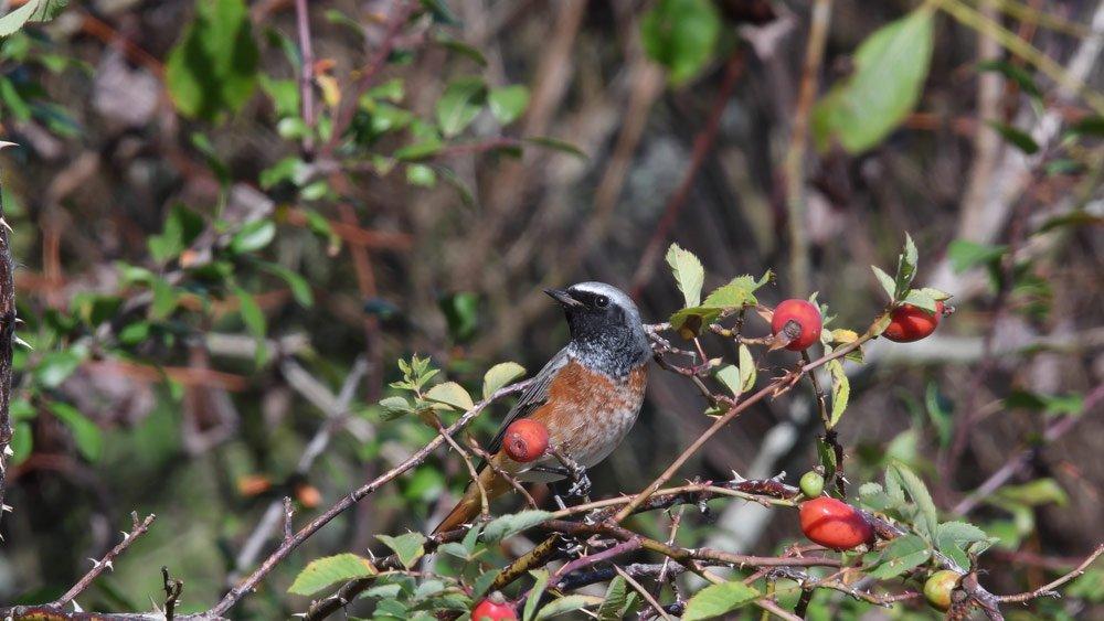 Vogelschutzhecke Pflanzplan: Geeignete Pflanzen und deren Anordnung